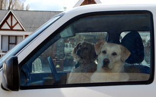 Dogs in car 1